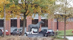 Pferdesportzentrum Münster